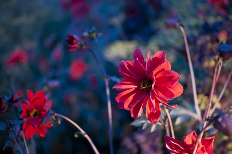 Tag 41 Flowerpower