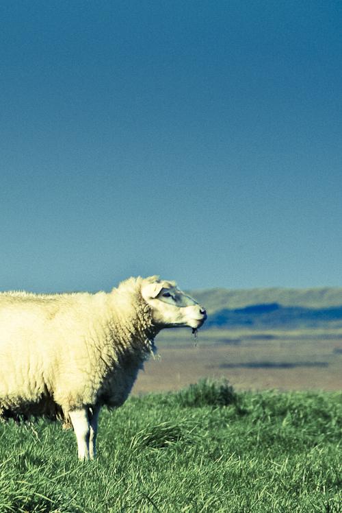 Tag 52 Alles Schaf!