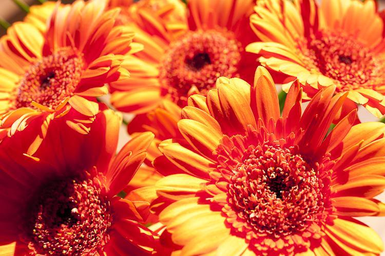 Tag 48 Flowerpower