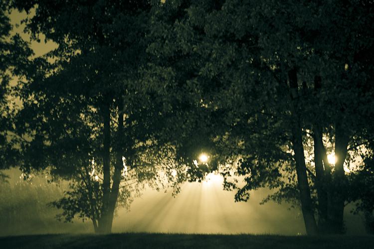 Tag 59 Verwunschener Wald
