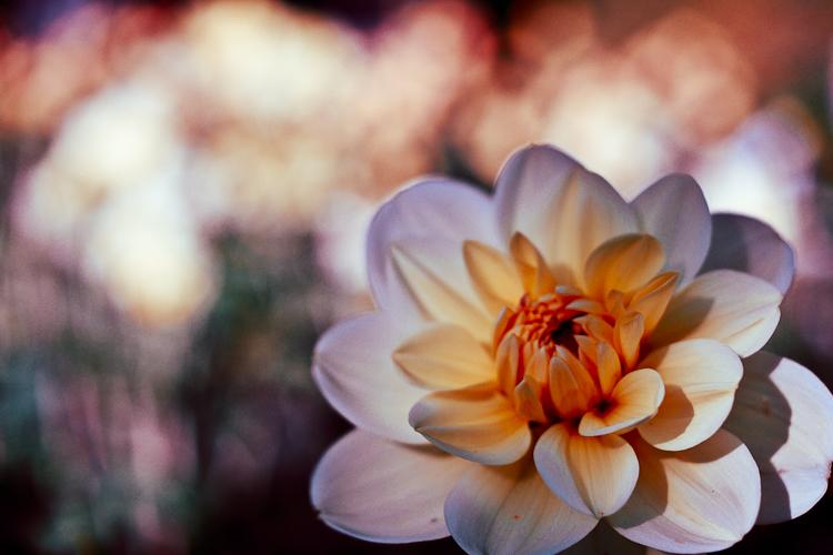 Tag 80 Blume - Version 1