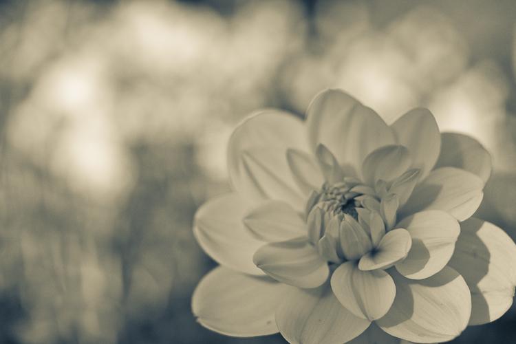 Tag 81 Blume - Version 2