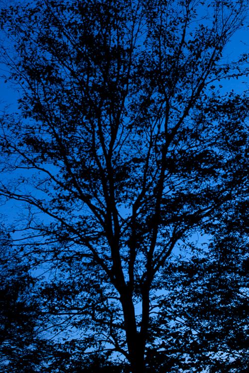 Tag 102 Baum bei Nacht