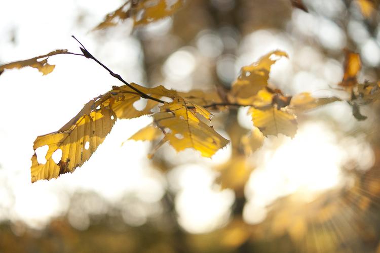 Tag 106 Herbstlicht II