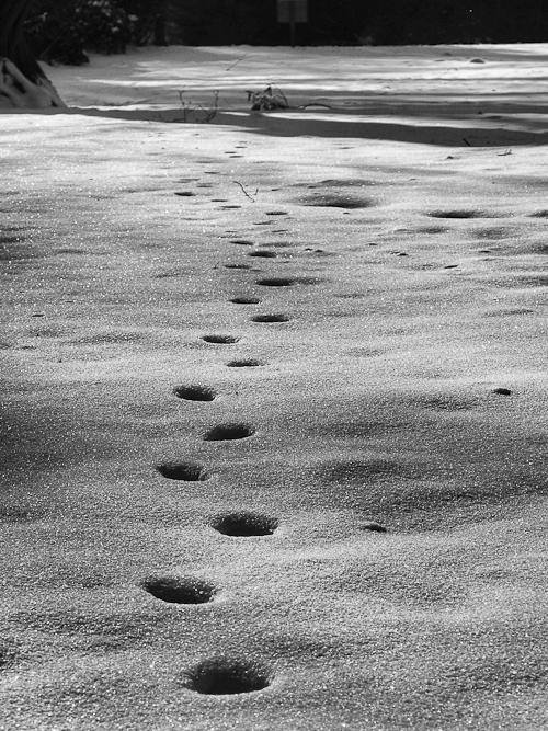 Tag 159 Winterlandschaft II