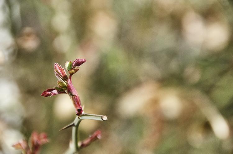 Tag 238 Der Frühling kommt