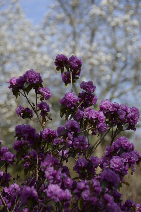 Tag 247 Endlich Frühling III