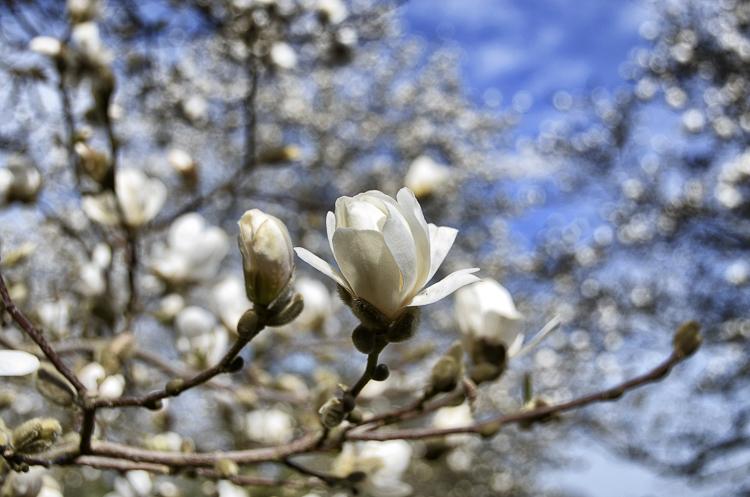 Tag 245 Endlich Frühling!