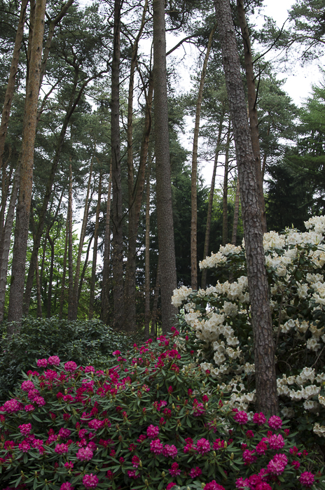 Tag 270 Rhododendron IX